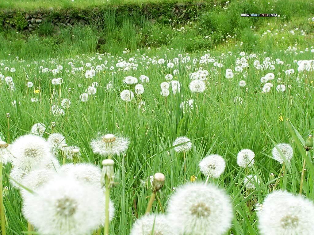 Mỗi tháng tượng trưng cho một loài hoa Hoaboconganh