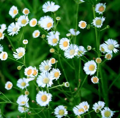 Mỗi tháng tượng trưng cho một loài hoa Hoacuctrang