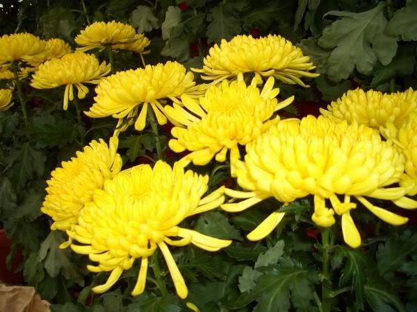 Mỗi tháng tượng trưng cho một loài hoa Hoacucvang