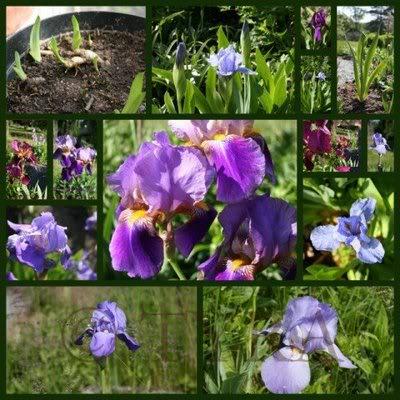 Mỗi tháng tượng trưng cho một loài hoa Hoairis