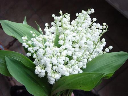 Mỗi tháng tượng trưng cho một loài hoa Hoalanchuong