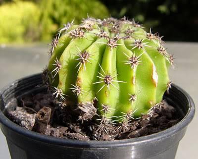 Cactus ID please Unknowncactus