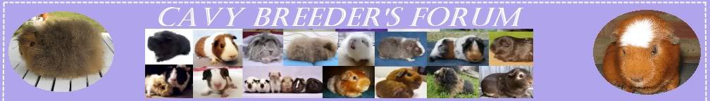 Cavy Breeders