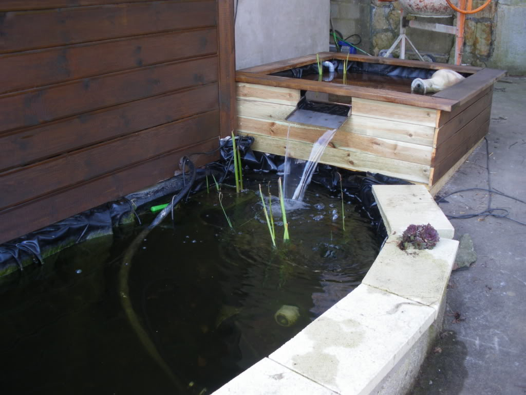 mon bassin de 7000l Bassin051