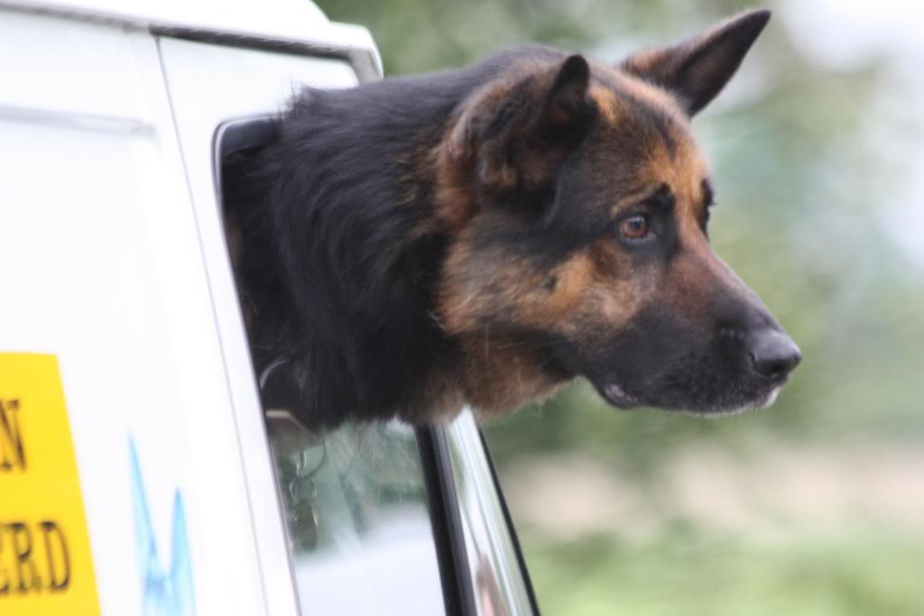 Rocky 6yr old homed IMG_7570