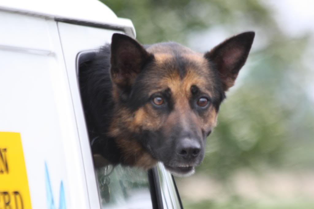 Rocky 6yr old homed IMG_7572