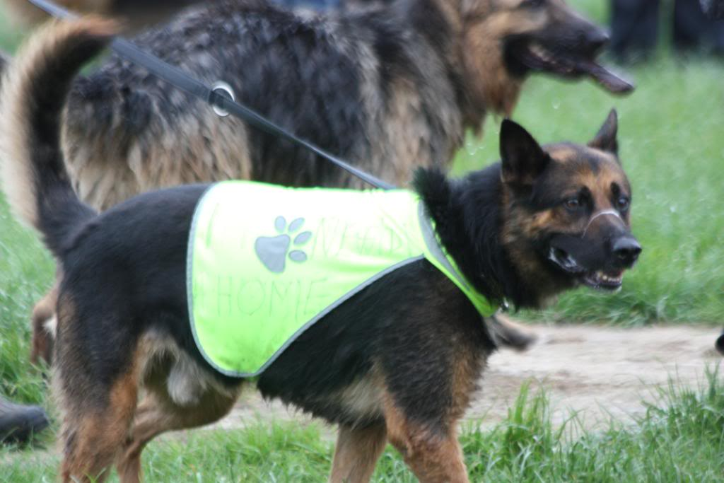 Rocky 6yr old homed IMG_7602