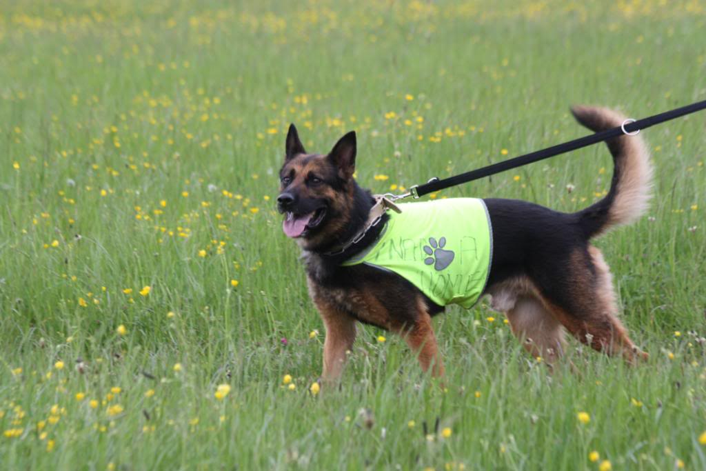Rocky 6yr old homed IMG_7654
