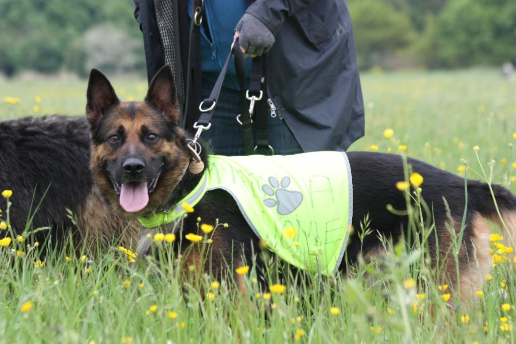 Rocky 6yr old homed IMG_7657