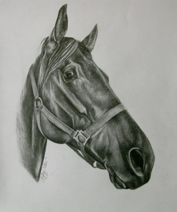 Horse & Hound Artistry - Page 8 Drawing-1