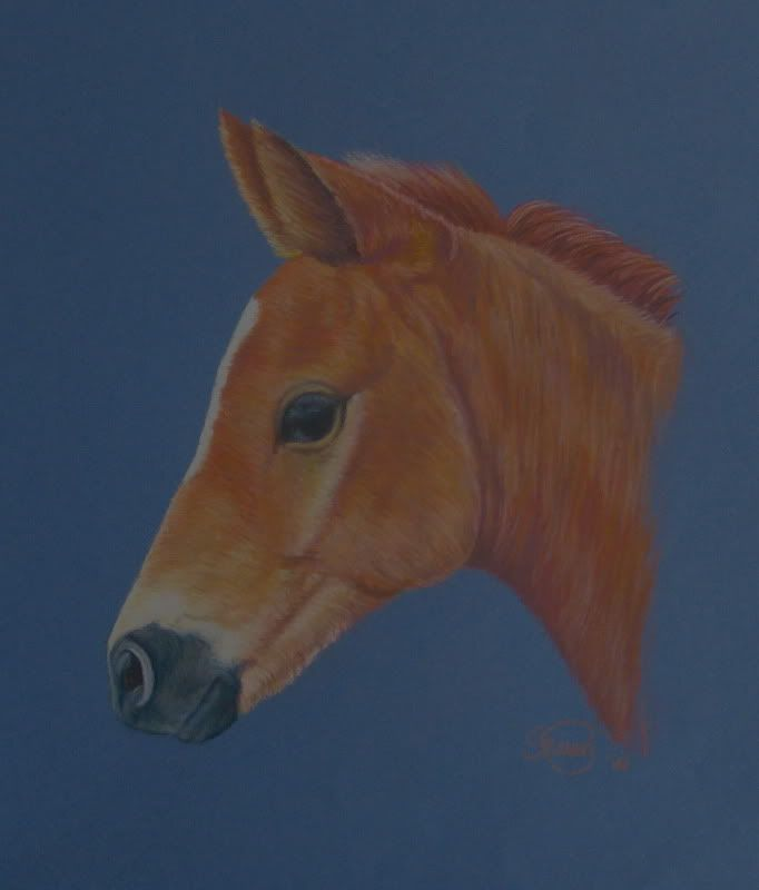Horse & Hound Artistry - Page 4 IMG_6246
