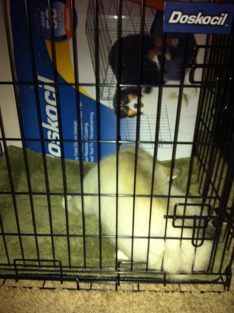 Crate Training - Page 3 0722ffea