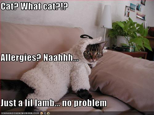 Lolcats thread! CatAllergies