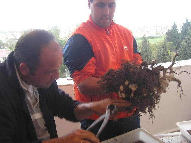 ayuda mi bonsai se muere :C respondan rapido - Página 2 P1010039