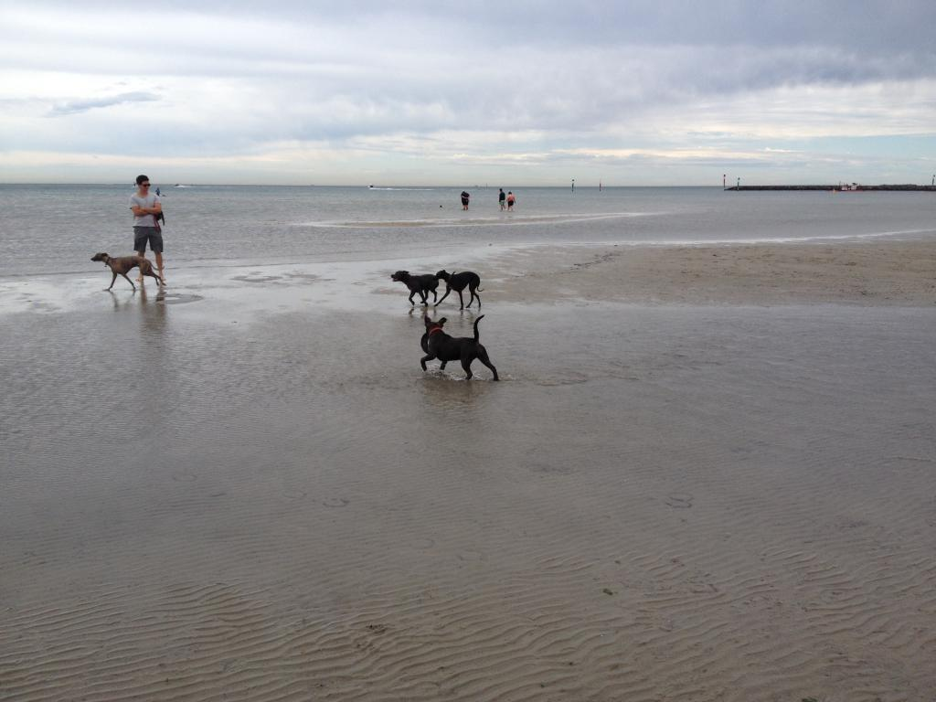Visit to the dog beach IMG_1212