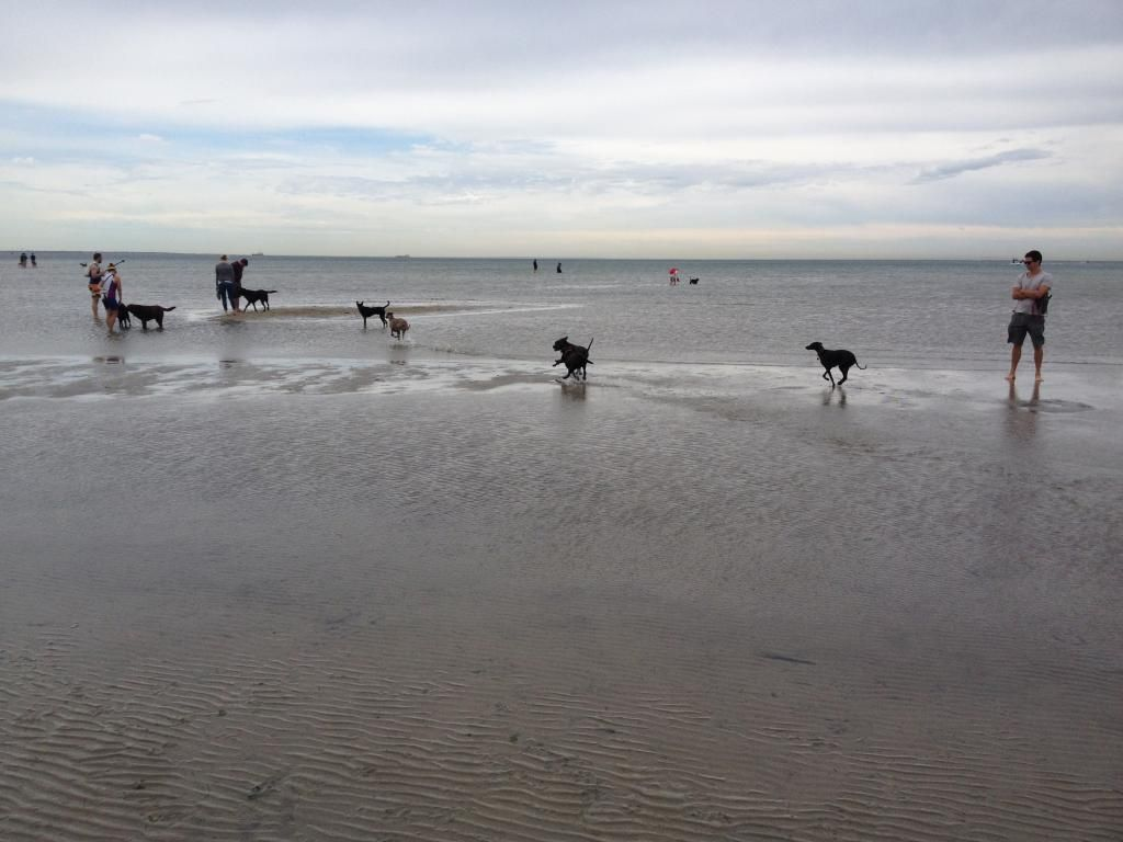 Visit to the dog beach IMG_1213