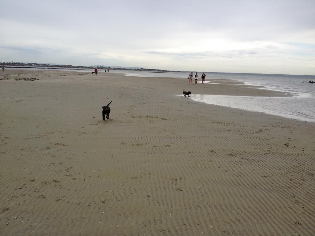 Visit to the dog beach IMG_1215