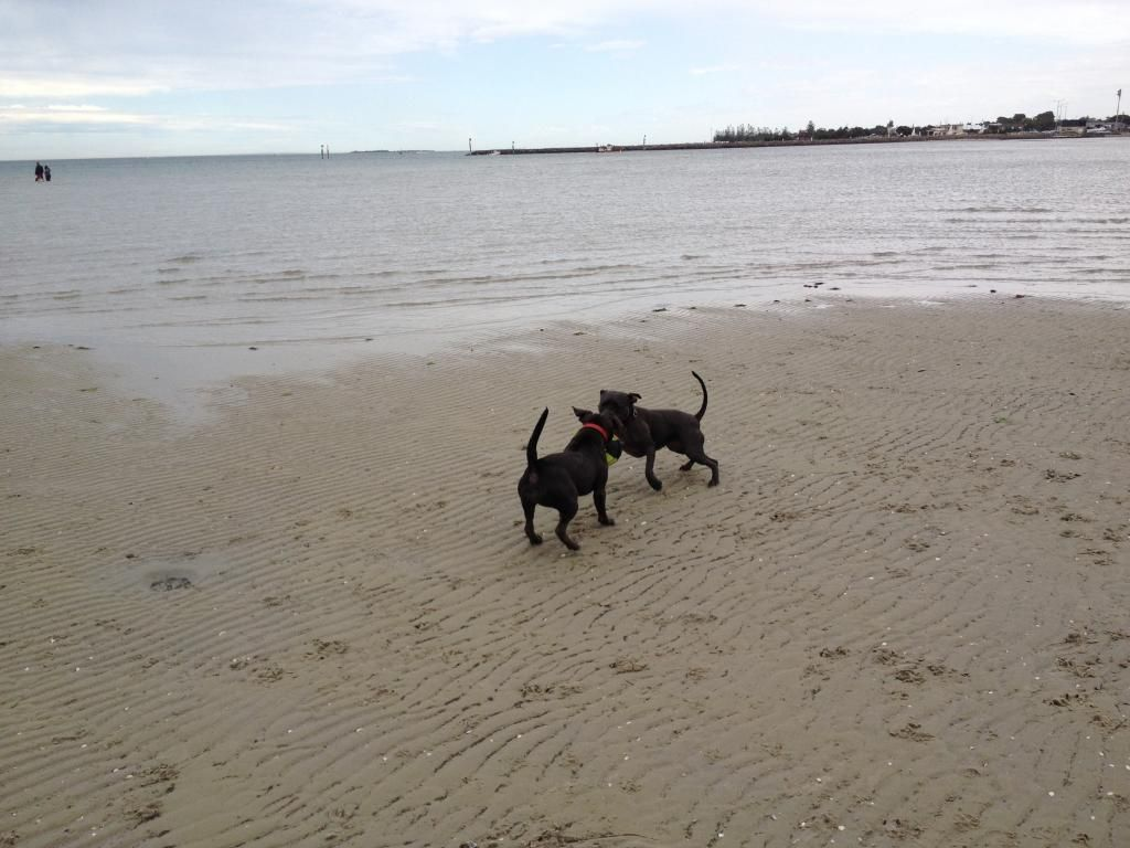 Visit to the dog beach IMG_1216