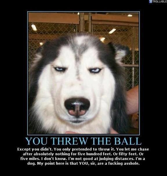 the all Dog thread! 405318_456640901035522_724158751_n