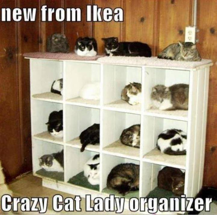 Lolcats thread! - Page 7 481109_3510284635886_221950810_n
