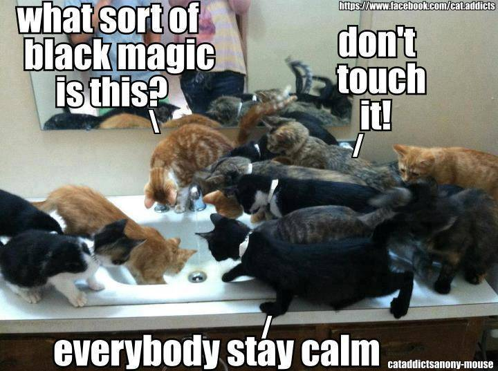 Lolcats thread! - Page 8 548618_311848025589559_942572487_n_zpsc3aea389