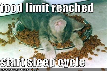 Lolcats thread! - Page 4 Kitten