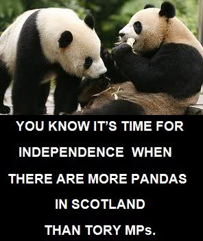 FREEDOM!!!! - Page 4 Pandas