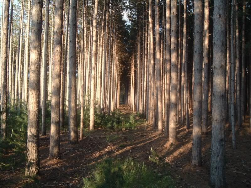 Amethystpack Trails Trees