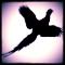 Upland Game Bird