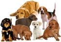 Uopšteno o psima