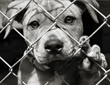 Zaštita i dobrobit životinja