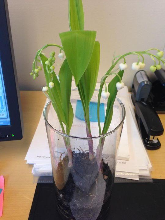 Наши растения - Страница 3 5ADD694A-1BFA-4A82-A0A4-BBD22B6E1F01_zps6t1pbz3v