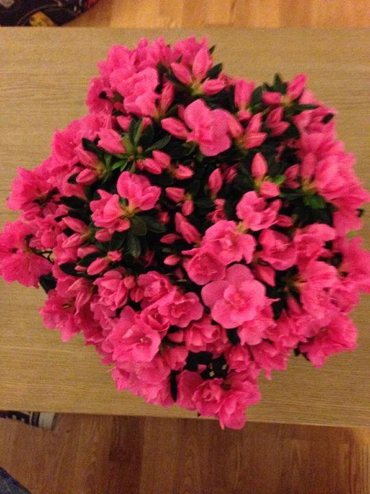 Наши растения - Страница 3 915B8817-C342-4736-832F-796255843C8F_zpspqvorx3u