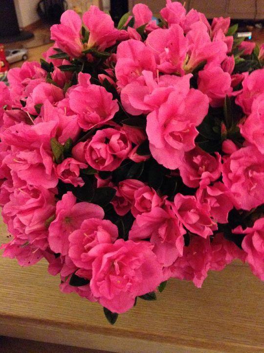 Наши растения - Страница 3 96437D3A-13DA-4E2B-9455-D613706D1B9B_zpsr1rh7hll