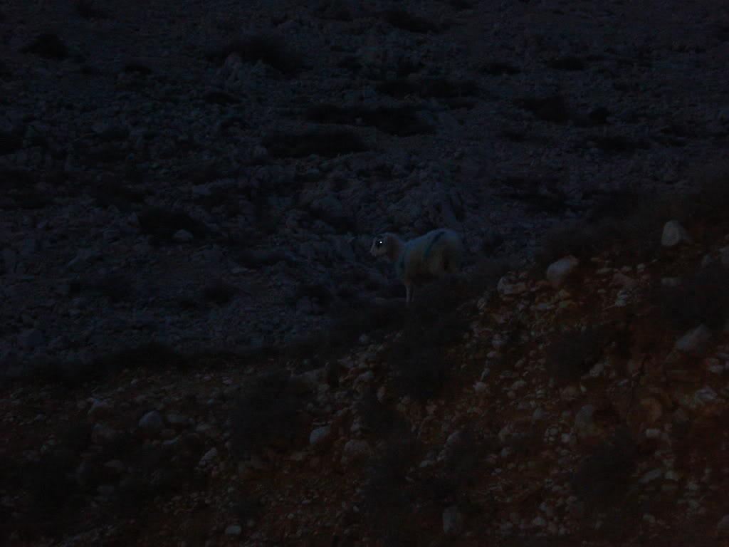 Hvali more, drž se kraja- hobiti idu u Isengard  DSC06443_zpsd30e686f