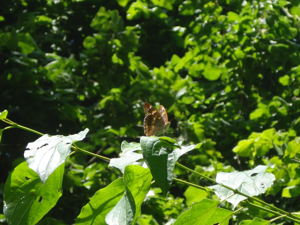 Slike insekata- buba - Page 2 DSC01378