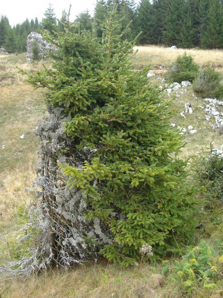 Druženje u Gorskom 22. i 23. 9.2012 404141_4494997370348_786267743_n