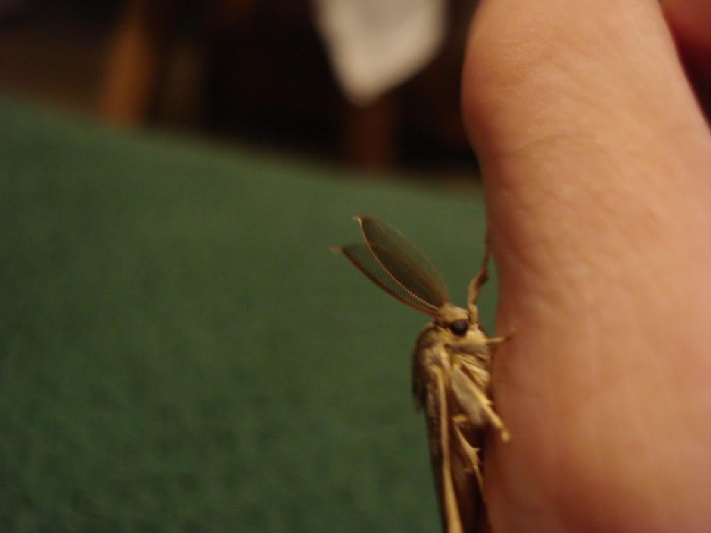 Slike insekata- buba - Page 2 DSC01175