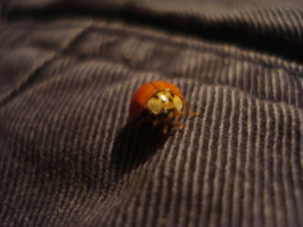 Slike insekata- buba - Page 2 DSC01194