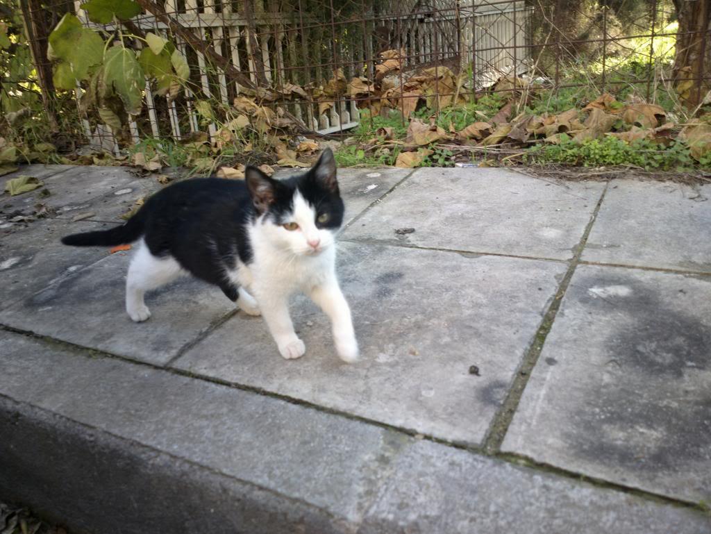 4 γατάκια 2,5 μηνών 2013-12-20-0627_zpsa933459a