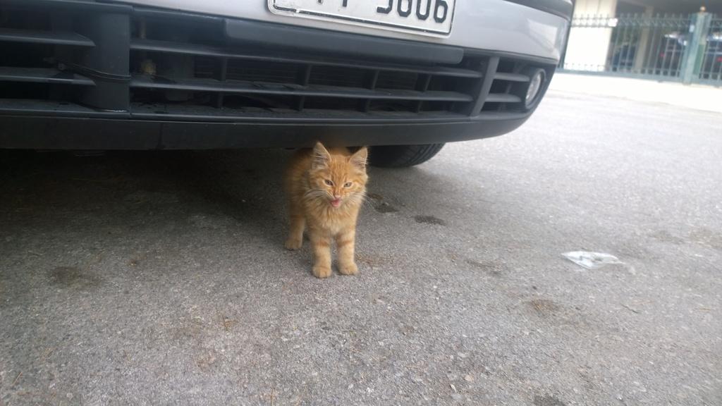 Garfield πορτοκαλογατος WP_20161022_10_11_54_Pro_zps7oit9ij4