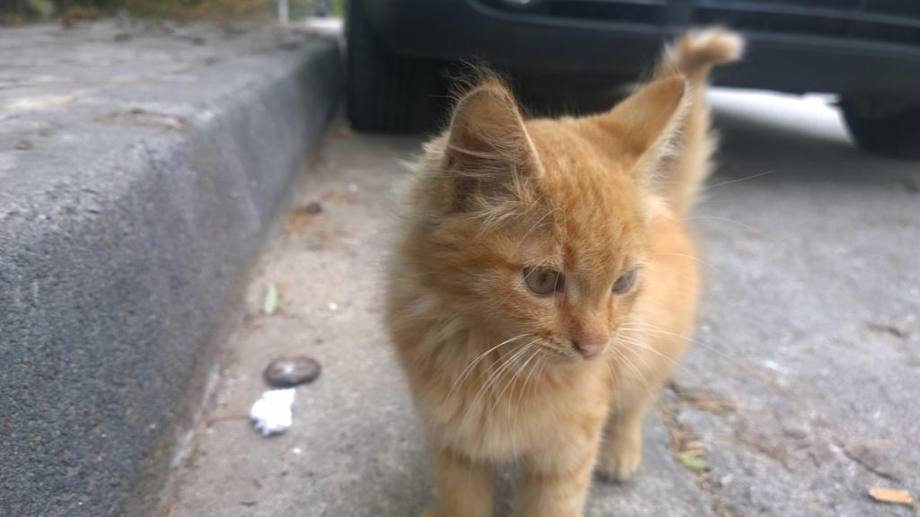 Garfield πορτοκαλογατος WP_20161022_10_12_03_Pro_zpsehvjposp