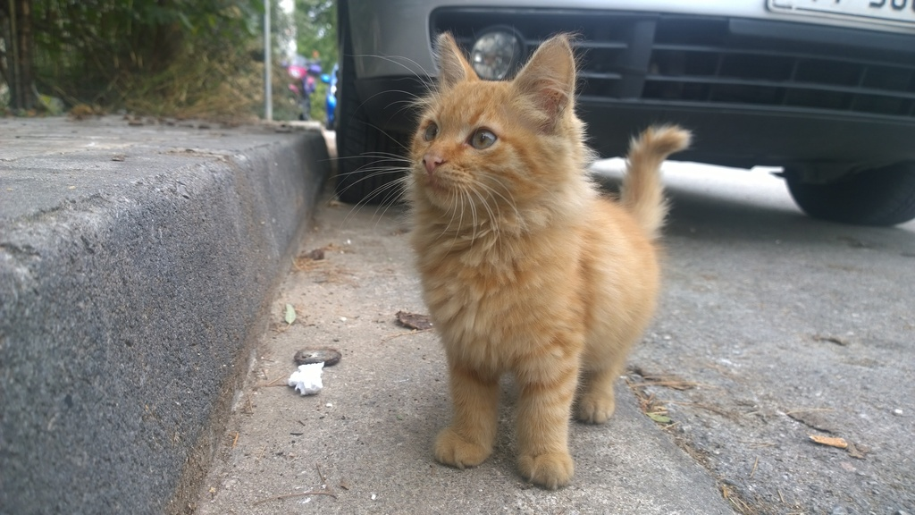 Garfield πορτοκαλογατος WP_20161022_10_12_08_Pro_zpsyratc6xr