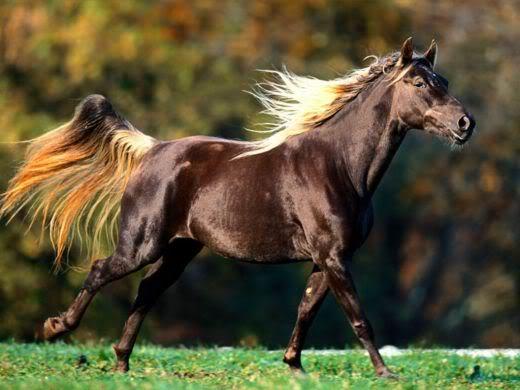 Horse | 馬 | Ngựa 1970280_f520
