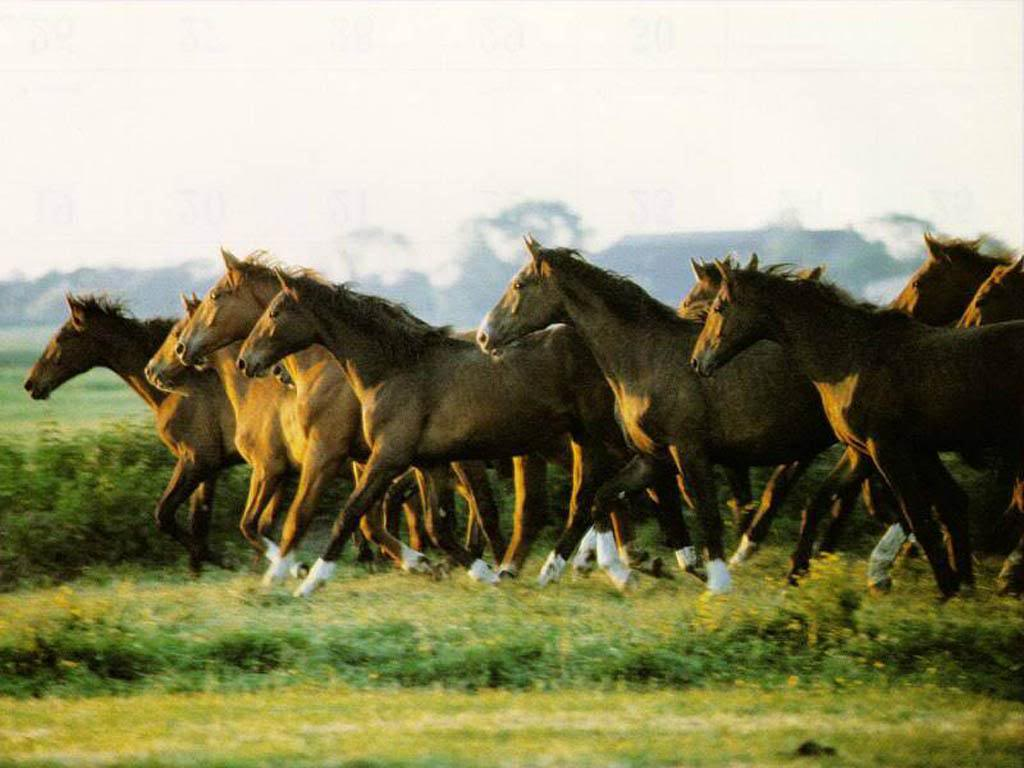 Horse | 馬 | Ngựa 1c95ea4aac566633edc83179b6d501e9