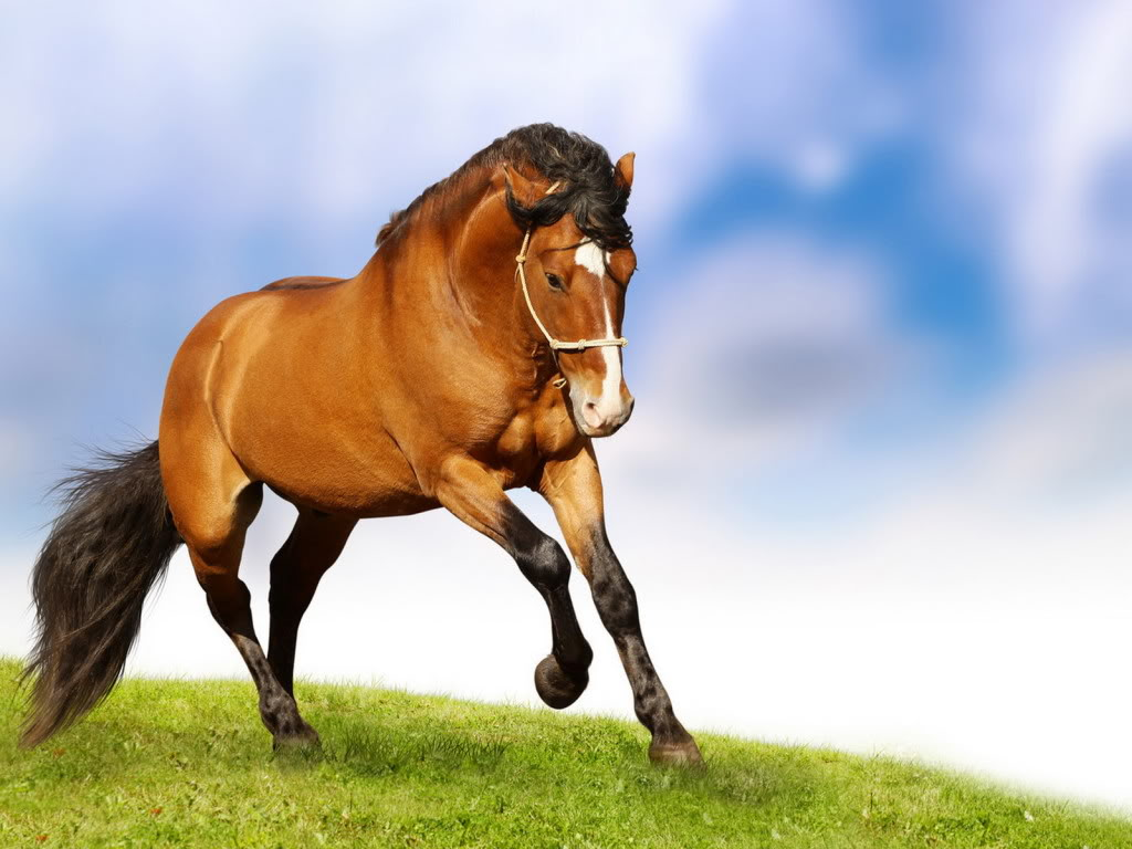 Horse | 馬 | Ngựa Animals_Horses_Horse_natural_grace_021307_