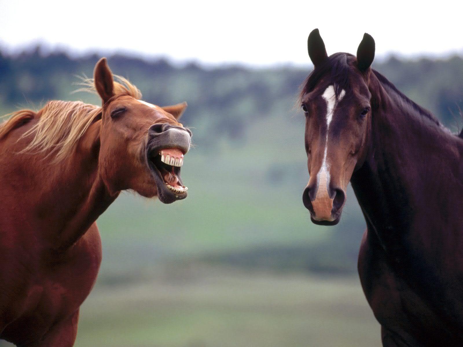 Horse | 馬 | Ngựa Horse-Play