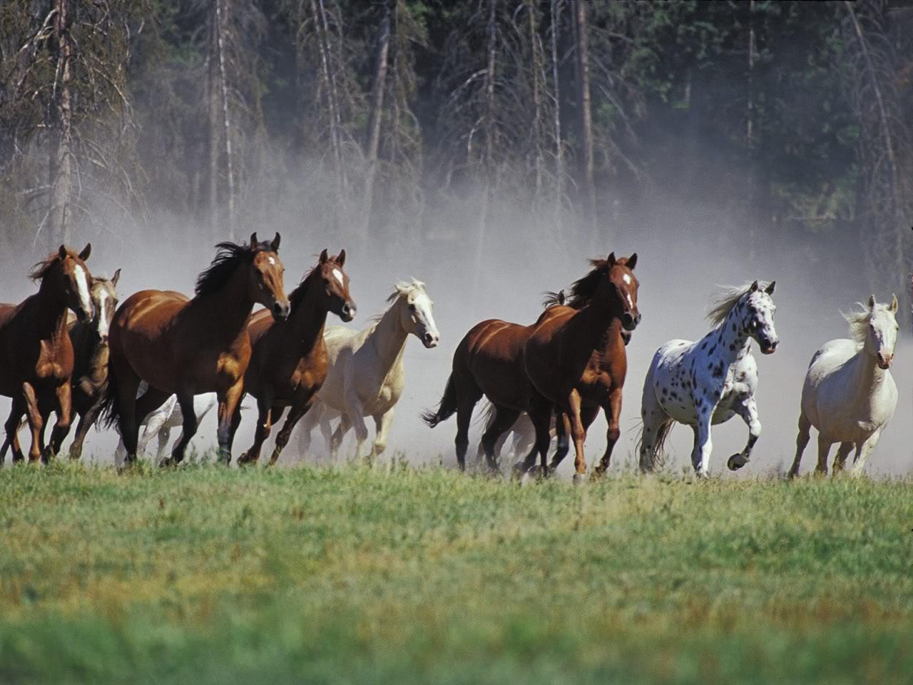 Horse | 馬 | Ngựa Horse-free-wallpaper