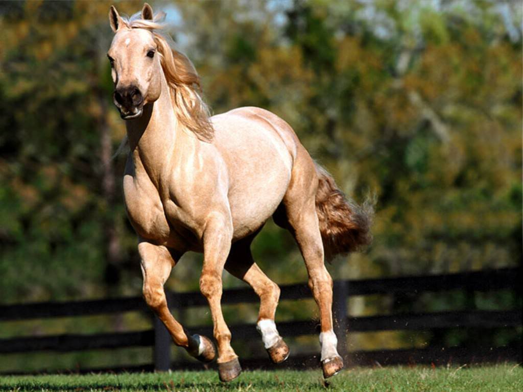 Horse | 馬 | Ngựa Horse