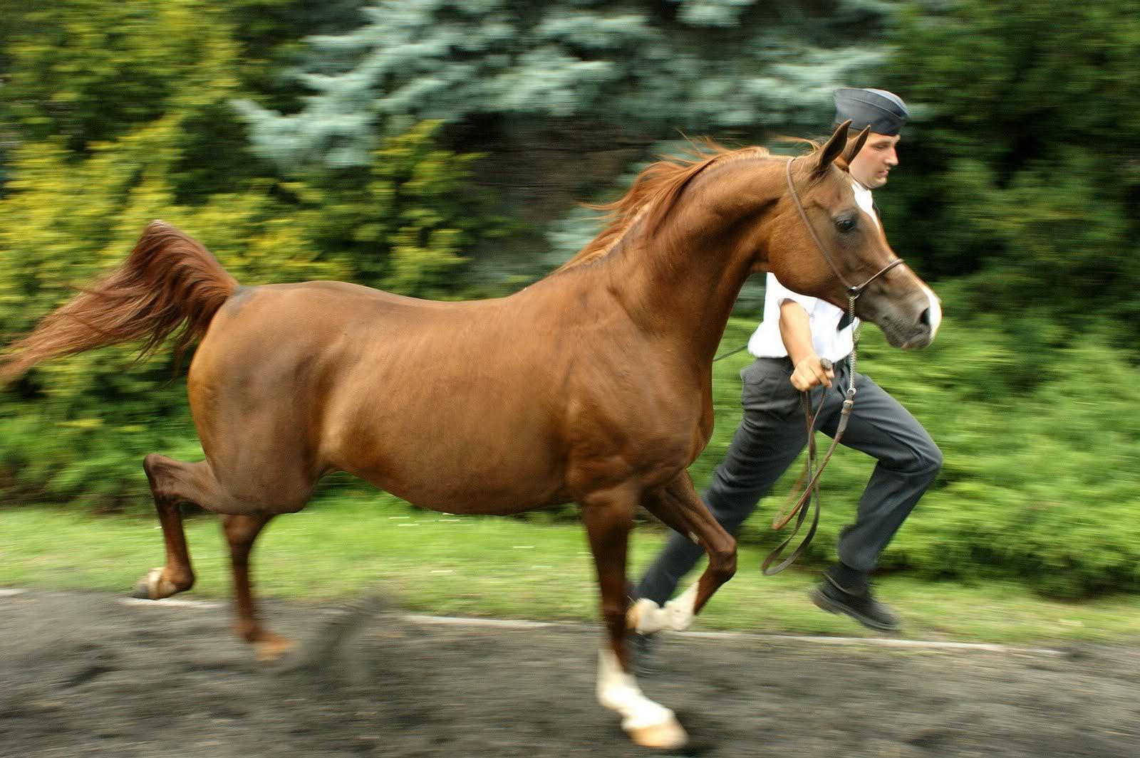 Horse | 馬 | Ngựa JKRUK_20080813_KWESTURA_OO_KLACZ_DSC07539